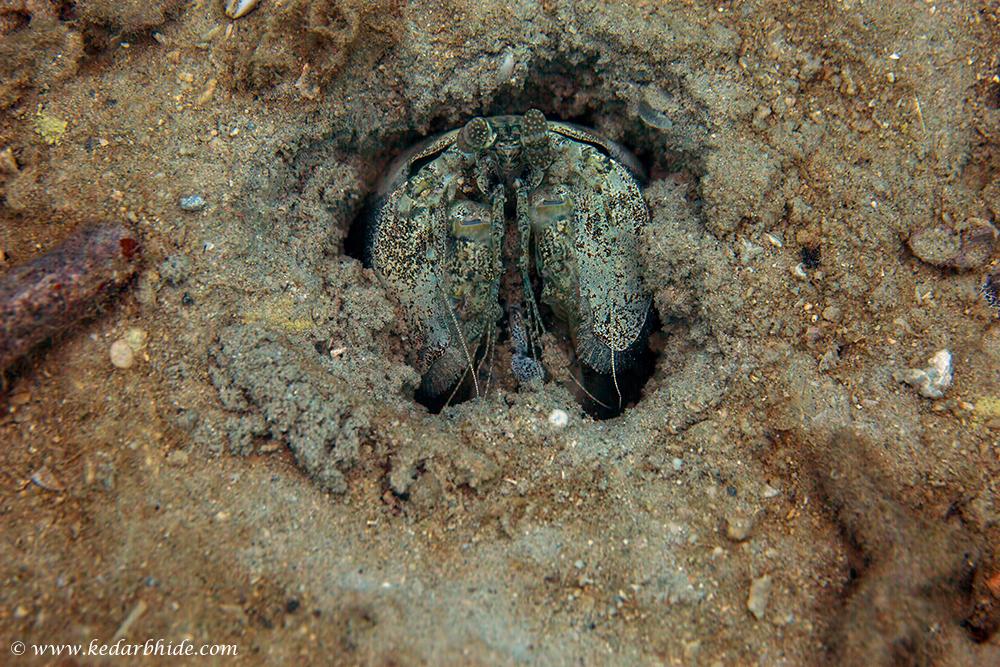 Unidentified lobster