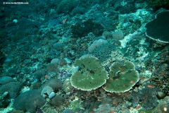 Tropical Reef with Table coral