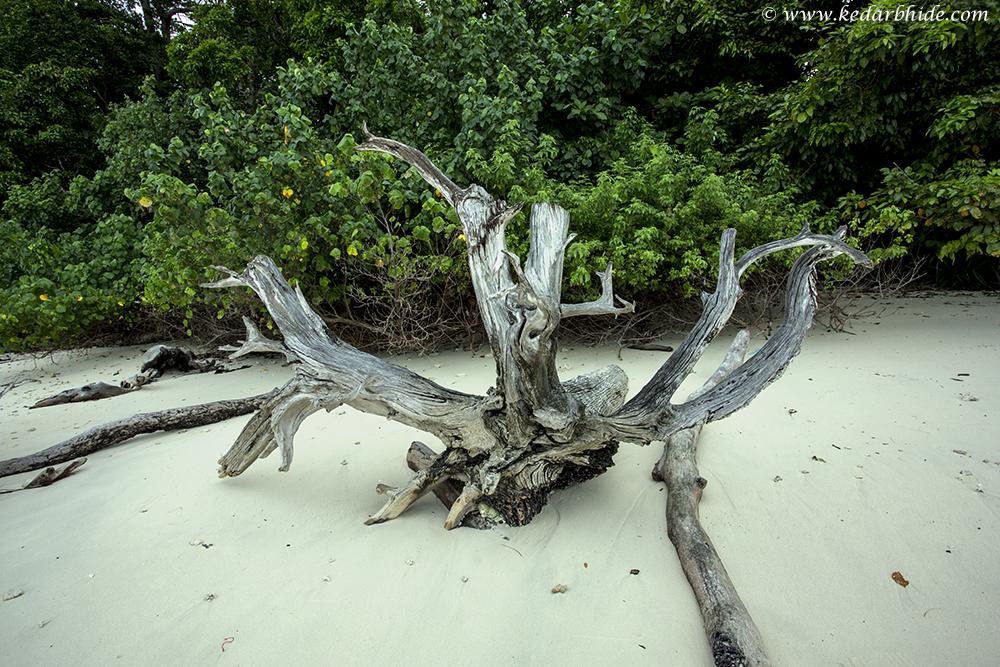 Dead Tree , havelock Island