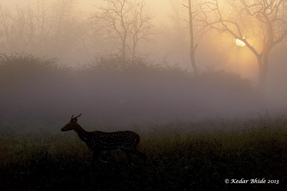 Sunrise at Bandipur