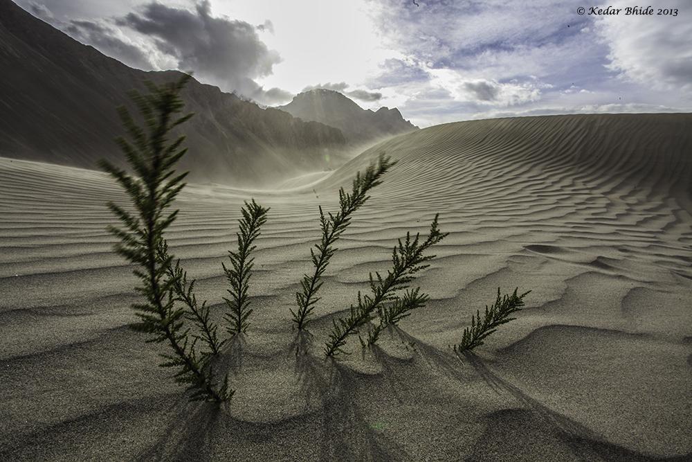 Nubra Valley, Sand dunes