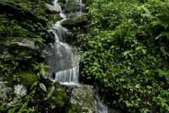Jalori forest