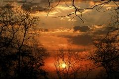 Sunrise at Tadoba National Park