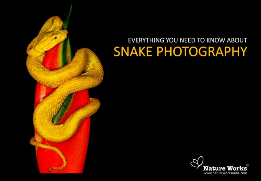 Snake-photography-thumbnail-1024x712.jpg